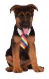 Kostým pro pejska kravata